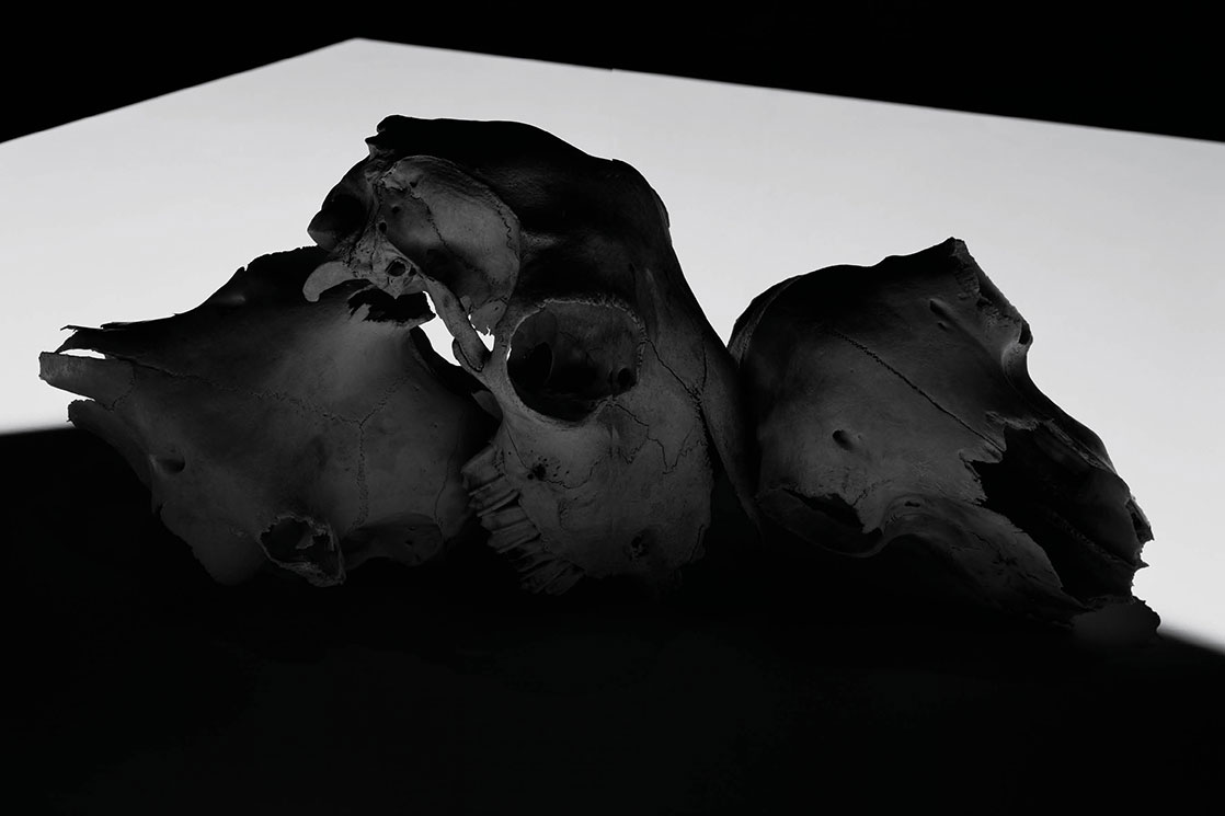 DAN_TOBIN_SMITH_SKULLS2